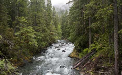 Cascade Mountain Forests