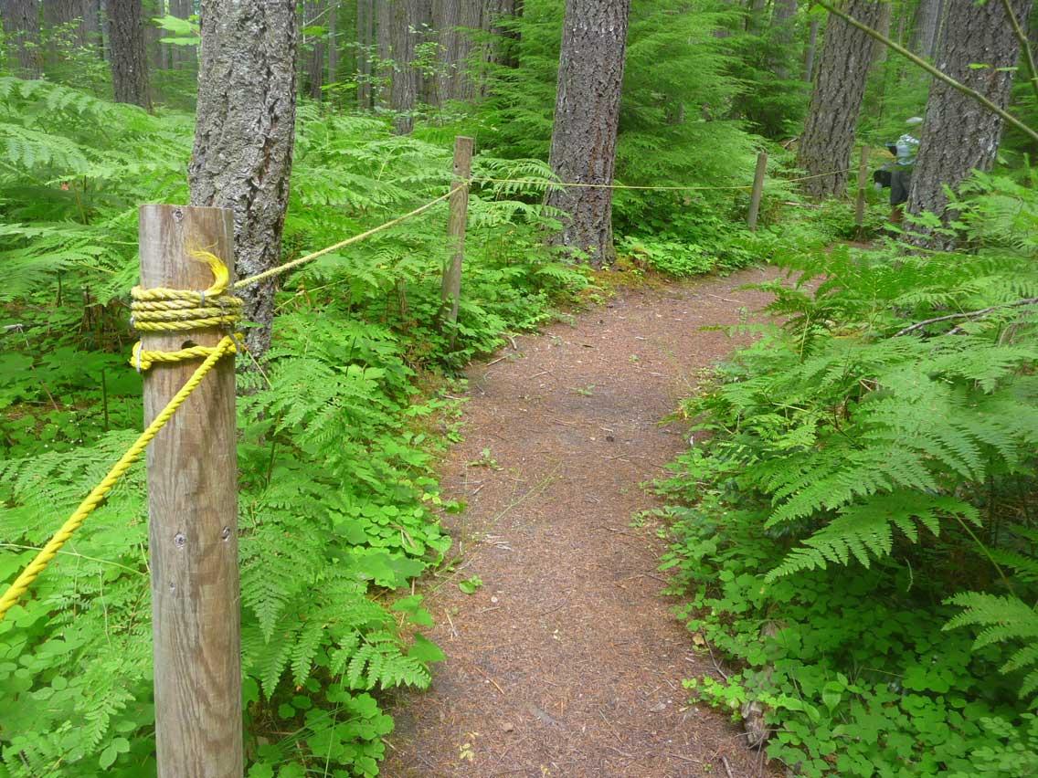 Cispus Loop Road Trip - Cispus Area - The Braille Trail