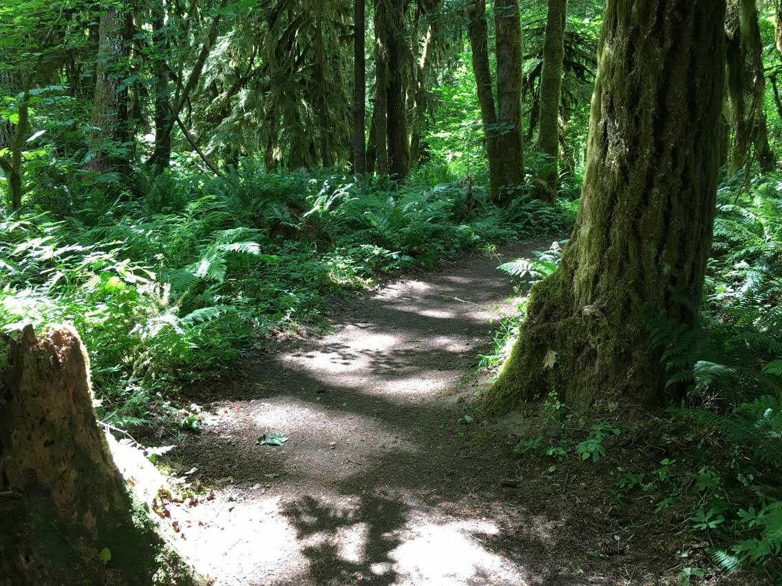 Cispus Loop Road Trip - Deep Forest Trail