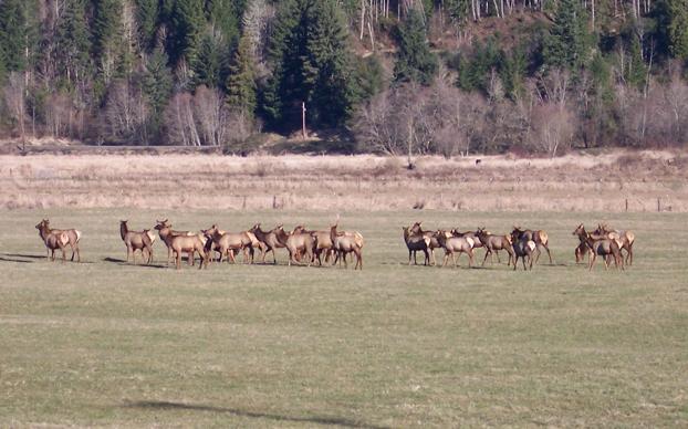 Wildlife Watching Packwood