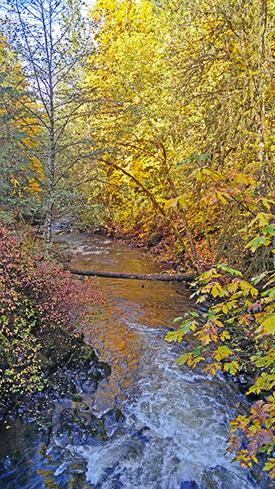 Fall Foliage along the mountain rivers