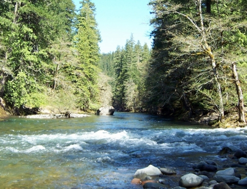 Gifford Pinchot National Forest Announces Reopening of Most Day-Use and Trailhead Sites