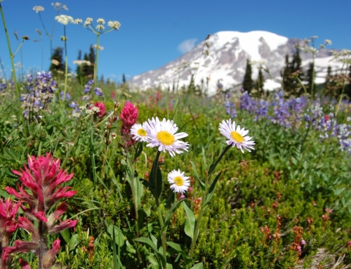 August is Star Gazing and Wildflower Watching Month at Mt. Rainier